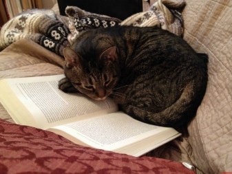 Image result for curling up with a good book image