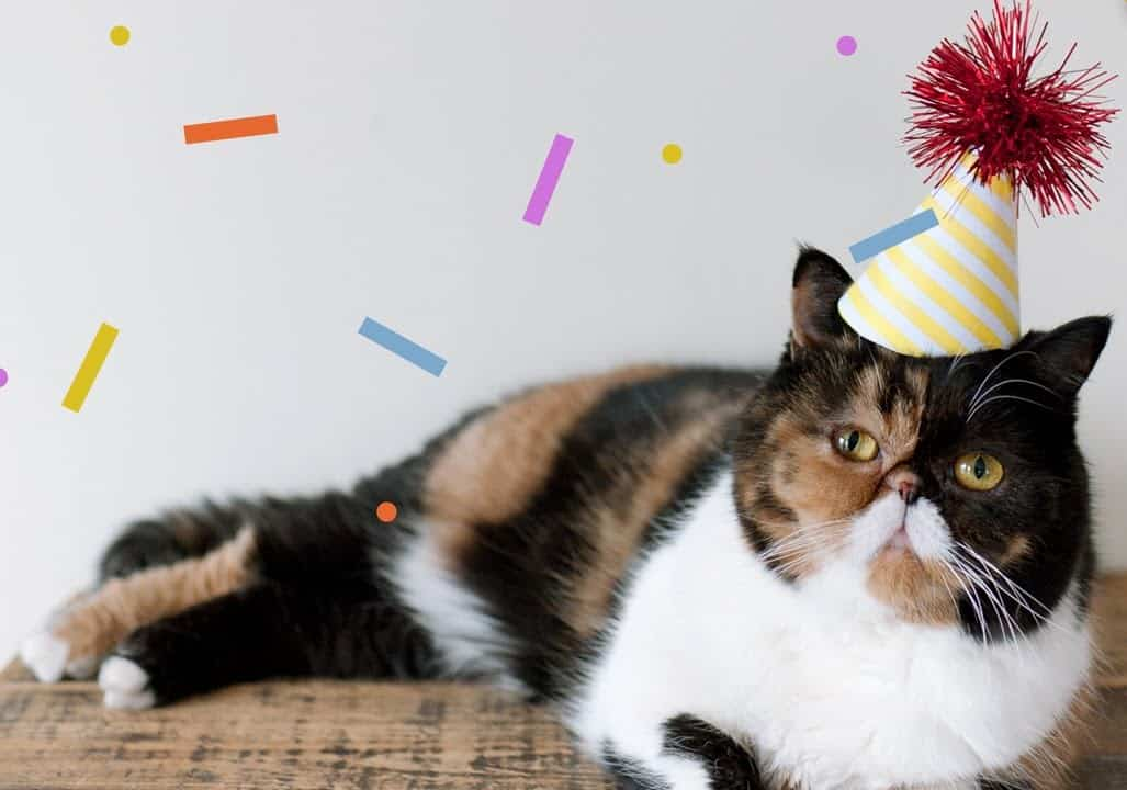 Image result for cat birthday