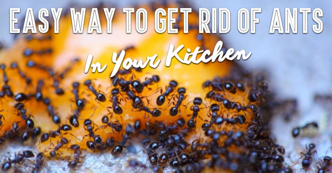 Like This Article Pin It Naturally Get Rid Of Ants In Your Kitchen