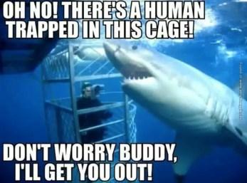 helpful-shark