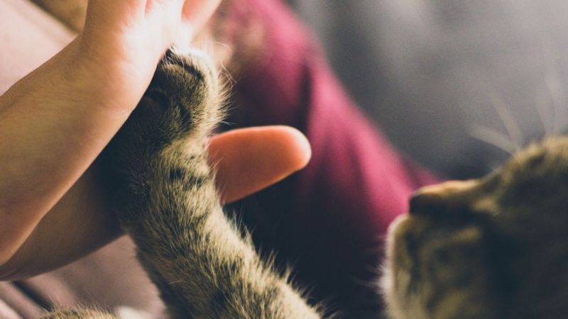 How to Train your Cat to Give You Its Paw in 5 Simple Steps