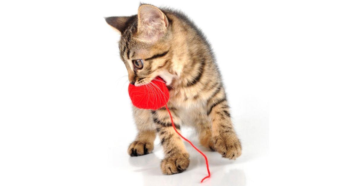 train cat play fetch