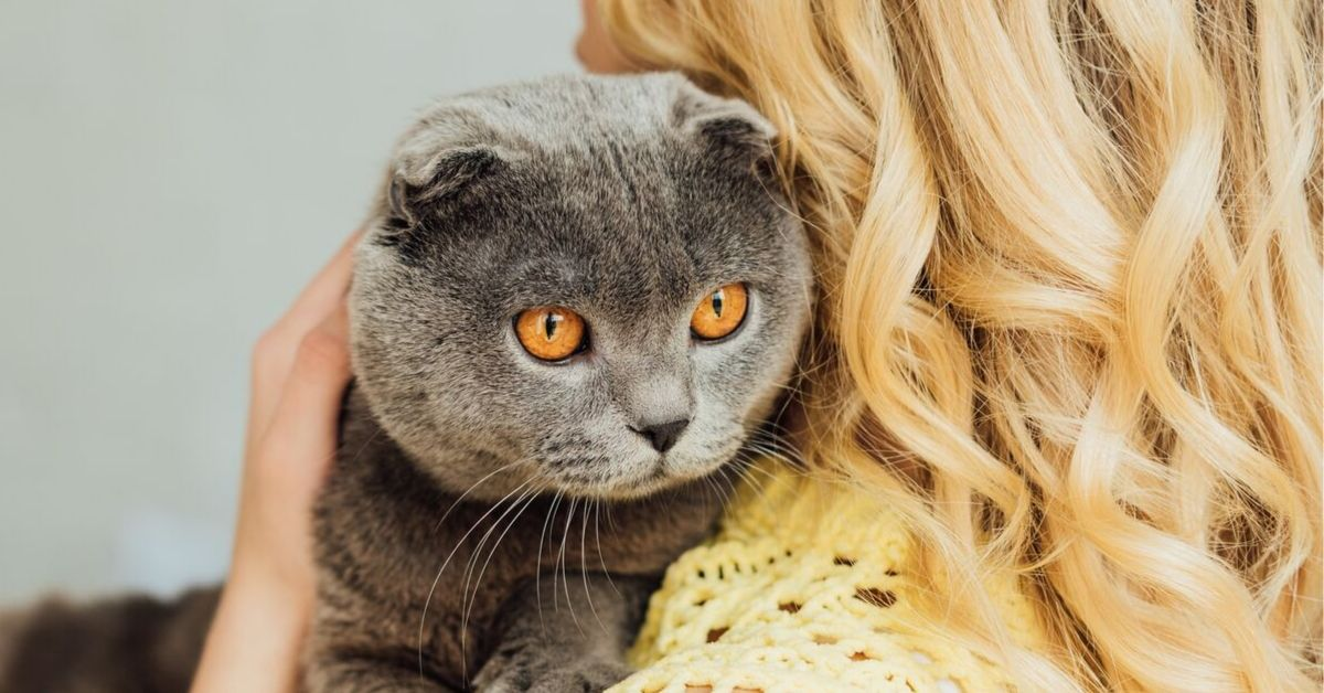 get your cat to like you