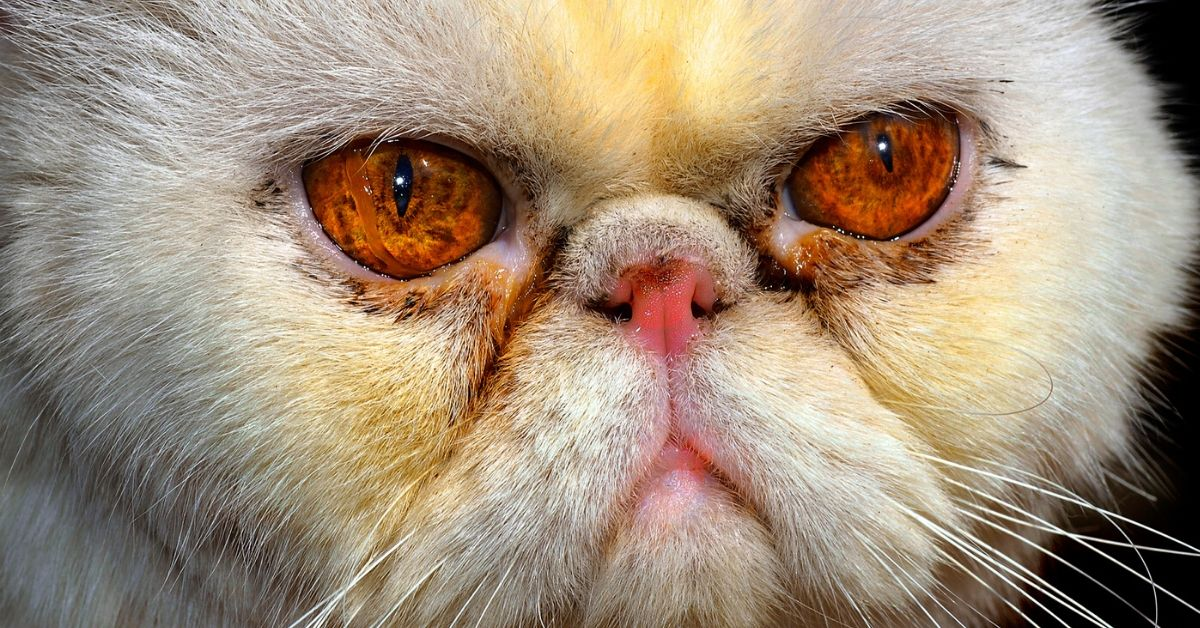 how to tell if your cat is angry