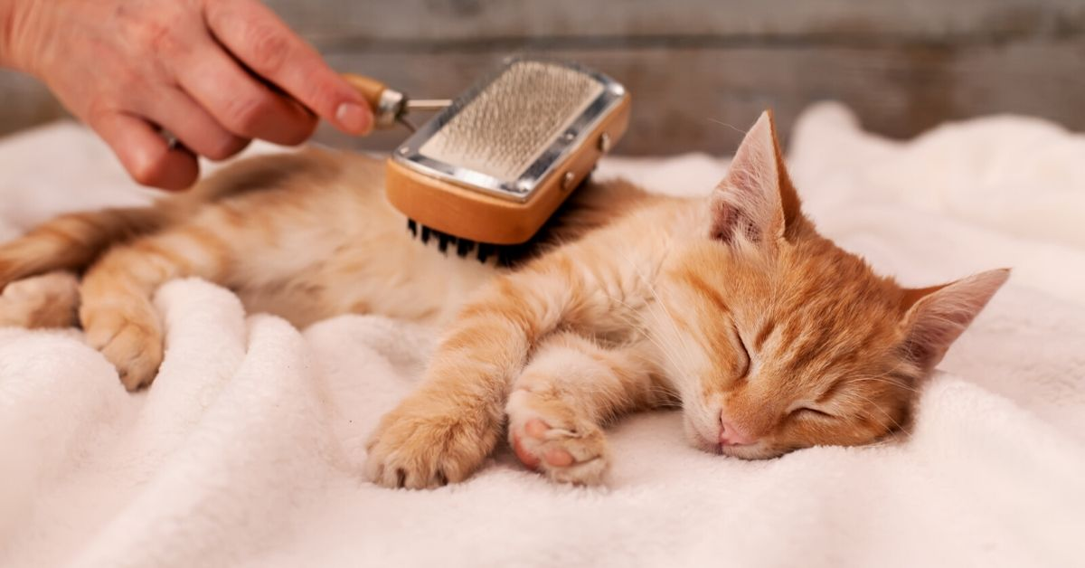 how to groom cat
