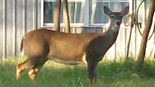 3-Deer habitat2