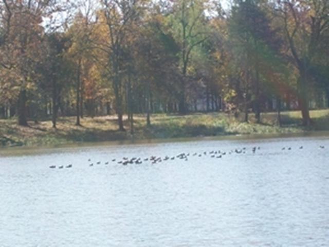 Horseshoe Bend Park