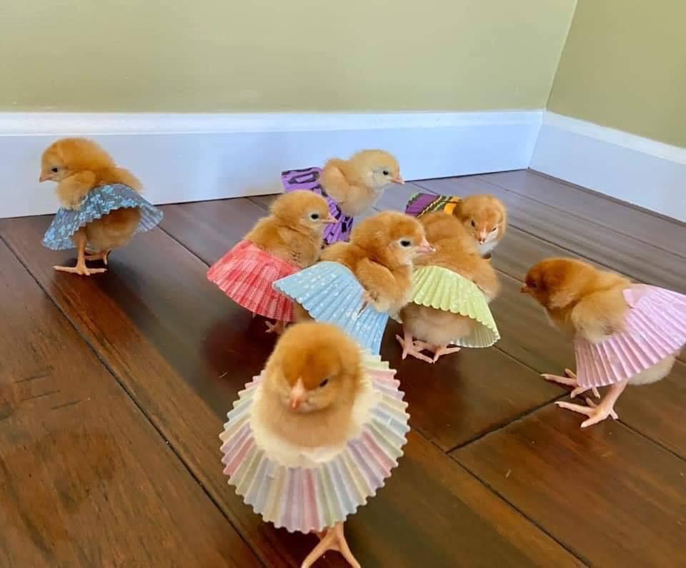 Chicken Dance – CUTETROPOLIS
