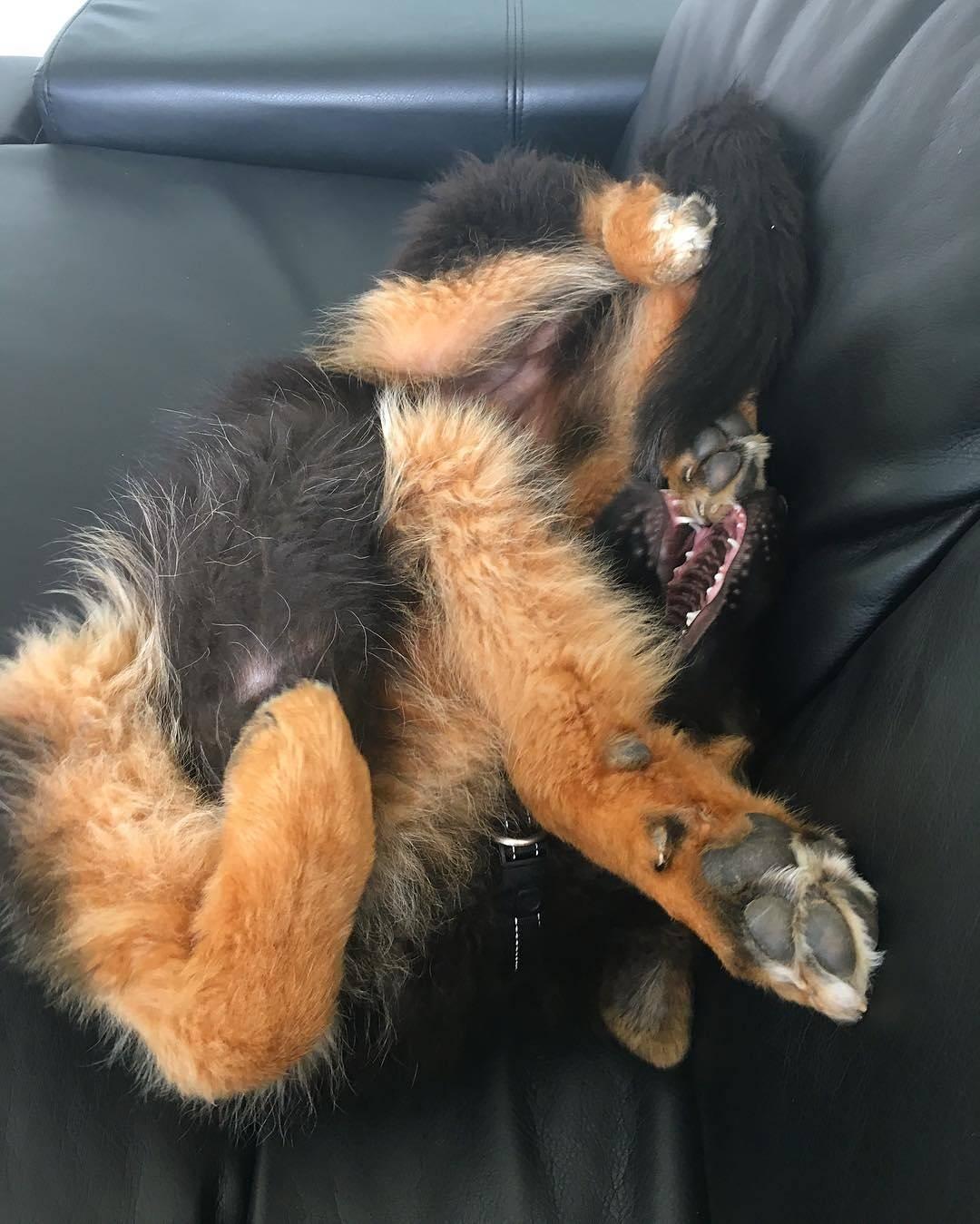 Scrambled Pup Cutetropolis