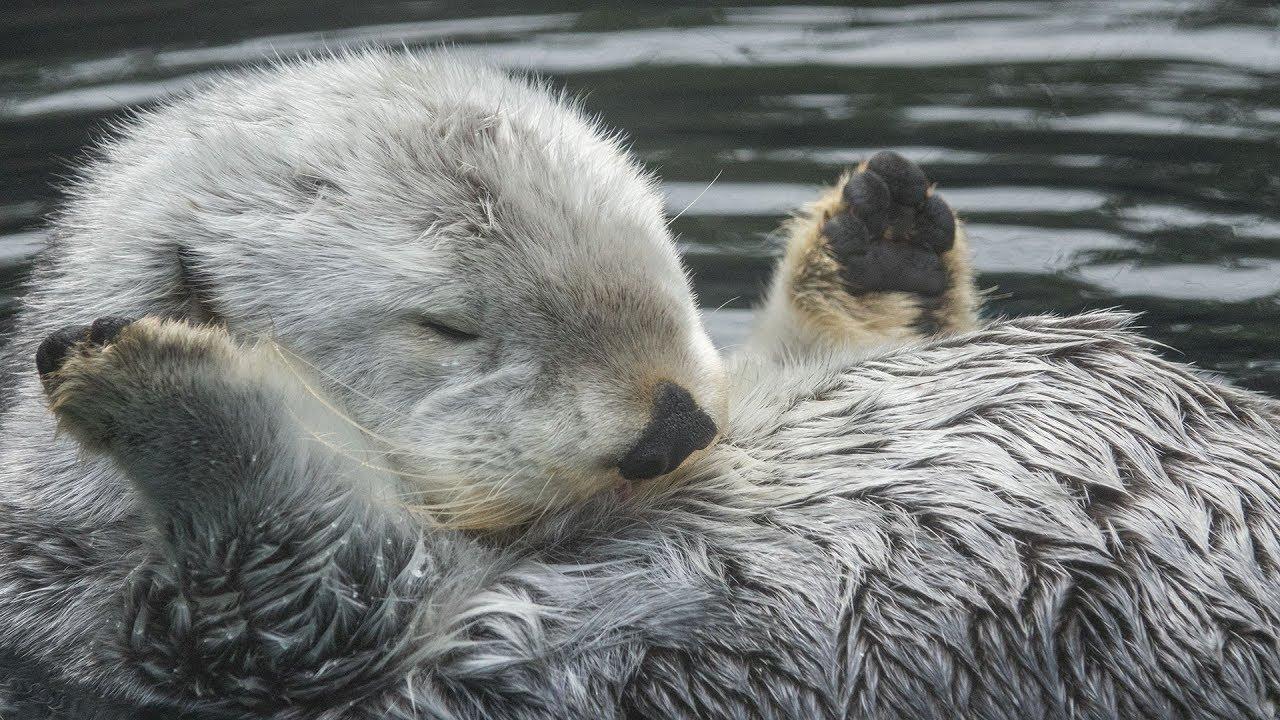 Elder Otter Eddie Cutetropolis