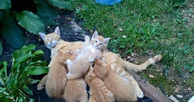 pile-of-kittens