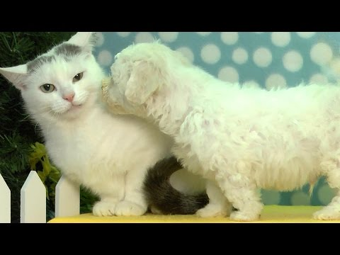 (VIDEO) Puppy Tries To Kiss Cat