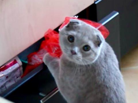 Gotcha Cat Gets Caught Stealing
