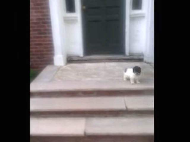 Puppy Afraid Of Stairs Finds A Better Way