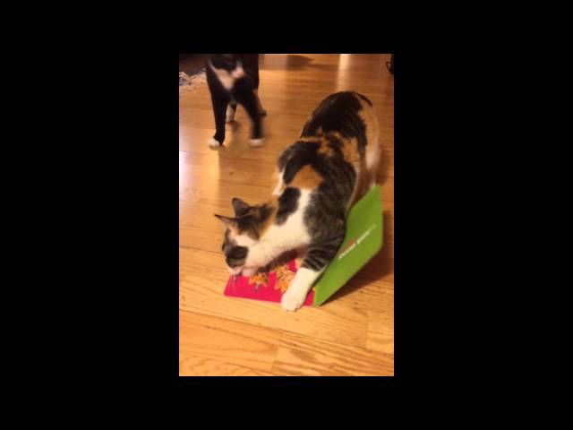 Cat Steals Singing Card