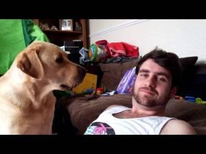 Ignoring A Labrador