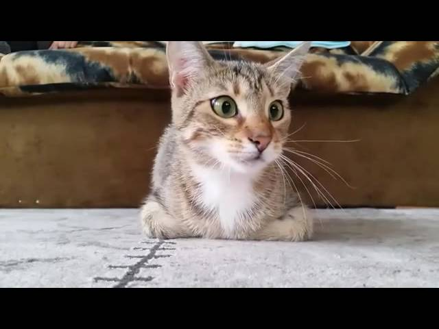 Funny Cat Watching A Horror Movie