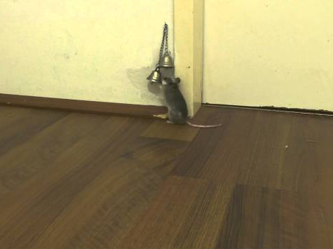How Pet Mouse Asks to Open the Door