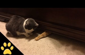 Cat Grabs Treats From Beneath A Bed