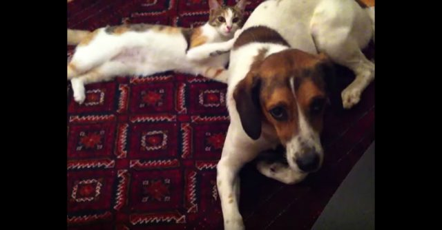 (VIDEO) Funny Sneaky Kitty Vs Puppy