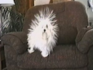 Funny Static Dog video