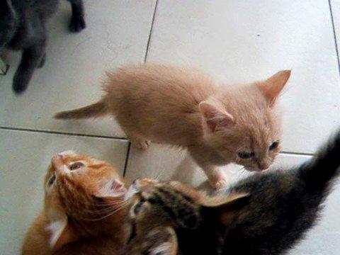 Noisy Kittens Waiting for Dinner