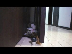 Funny Cat Doing Somersault
