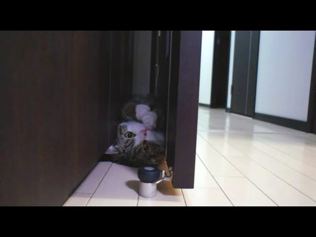 (VIDEO) Funny Cat Doing A Somersault