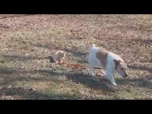 Cat Won't Let Dog Off The Leash