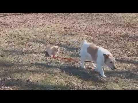 Cat Won't Let Dog Off Leash