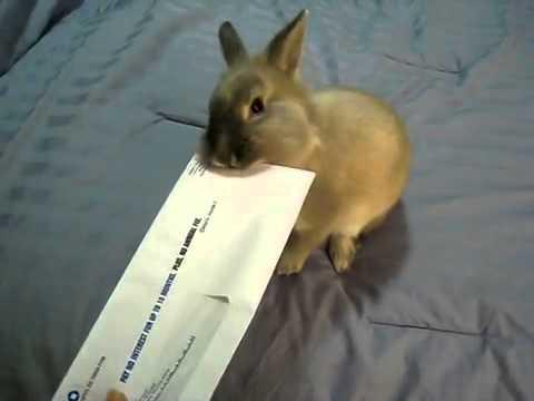 Cute Bunny Letter Opener