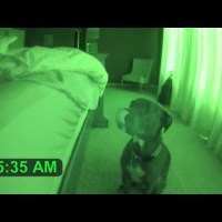 Pit Bull Alarm Clock with Snooze Feature