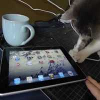 Curious Cat Investigates An ipad