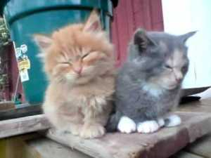 Cute Tired Little Kittens Trying to Fall Asleep Sitting Up