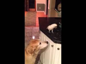 Bird Feeds Dog Noodles