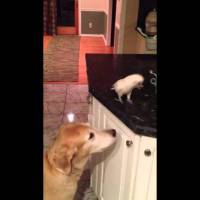 Bird Feeds Dog Noodles
