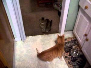 Blind Cat Is A Genius