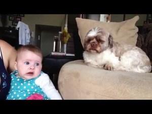 Dog Comforts Baby