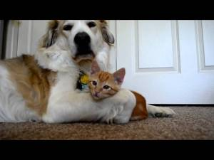Cute ADORABLE Kitten Tries To Steal Dog's Tongue