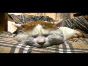 Cute Snoring Cat