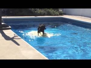 Smart Bodyboarding Dog
