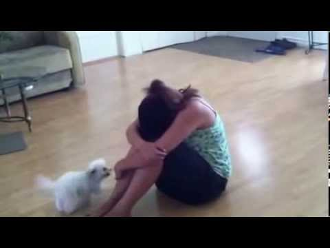 Maltipoo Puppy Reacts to Crying