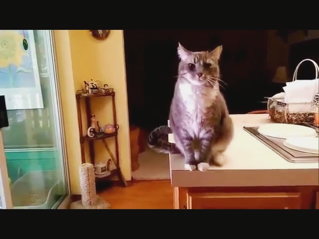 Cat Bows To Human Like A Little Gentleman