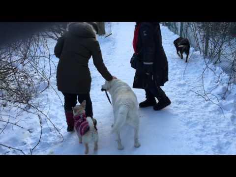 Dog Walks Other Dog