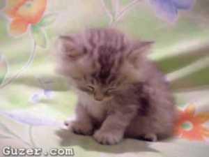 Cute Sleepy Kitten