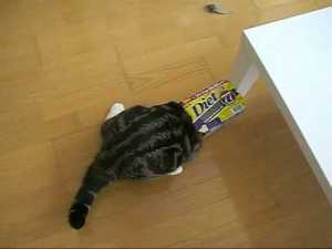 Cat Loves to Slide Into Boxes video
