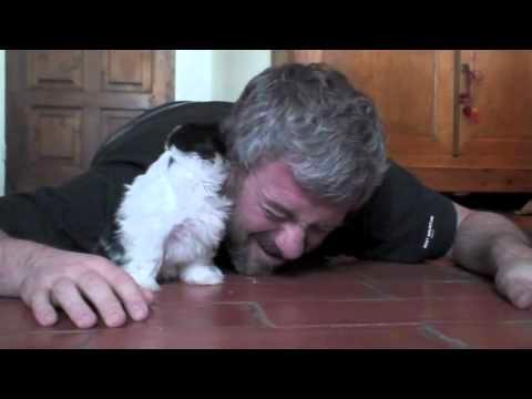 Shih Tzu Puppy Playing Joyfully With Dad
