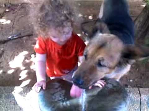 Dog Will Not Let Kid Drink From Water Fountain