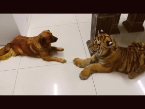 Dog Won't Share His Water With Baby Tiger