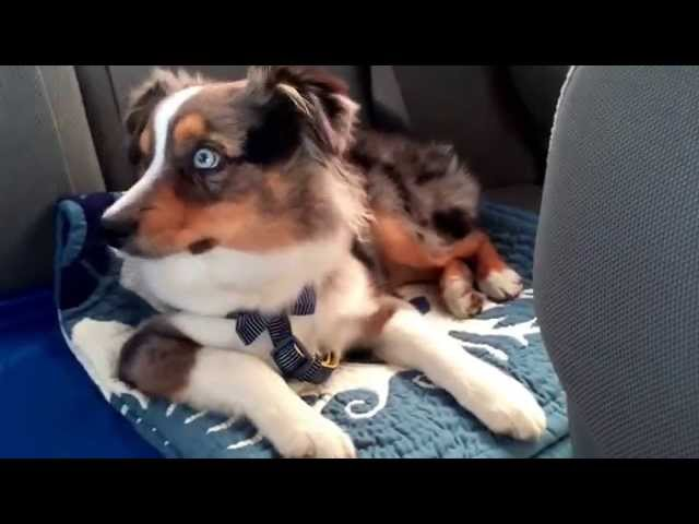 """Waking up our puppy to his favorite song """"Let It Go"""""""